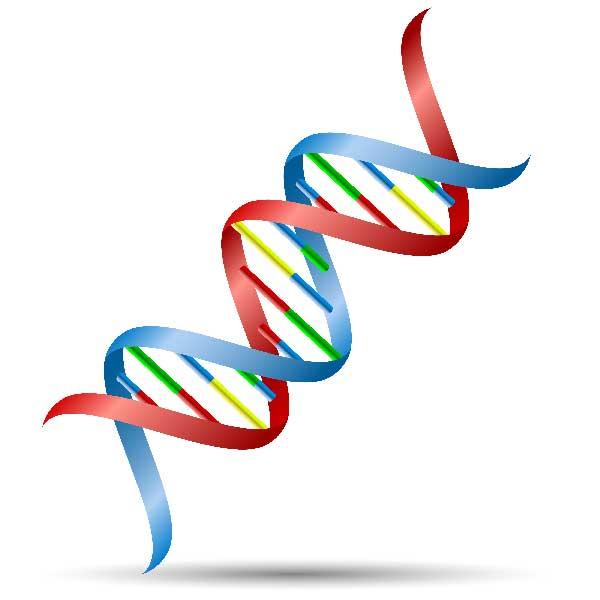 核酸のイメージ写真