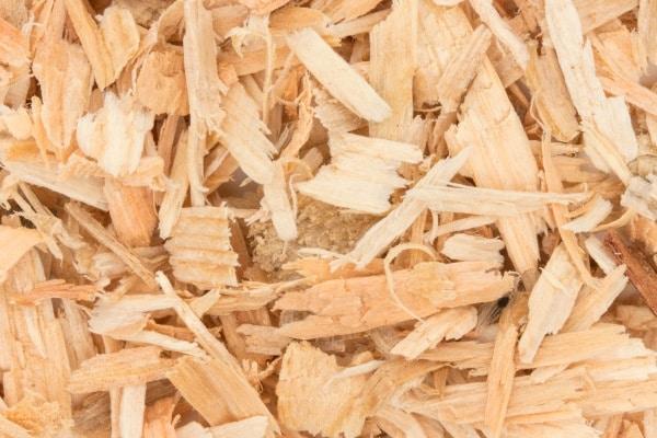 フランス海岸松樹皮エキスのイメージ写真